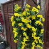 yellow artificial flower hanging basket