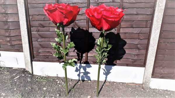 XL Giant Single Stem Red Rose