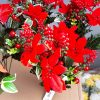 Artificial 40cm Velvet Red Poinsettia Bush & Eucalyptus, many Mixed Berries, Ideal for Christmas, Weddings, Graves and Home, Min Order on this Item