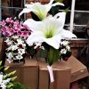 Artificial 66cm Lily Spray, 2 Heads 1 Bud, Ivory, Ideal for Christmas, Weddings, Graves and Home
